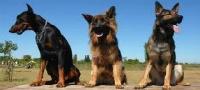 Compra venta de joyas Benbrook, Texas
