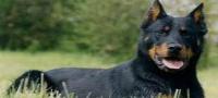 Compra venta de joyas East Brunswick, Nueva Jersey